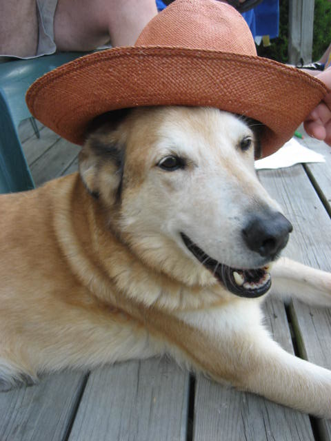 Adorable Dogs Wearing Hats A Gallery On Flickr