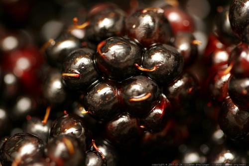 fresh picked neighborhood black berries    MG 9789