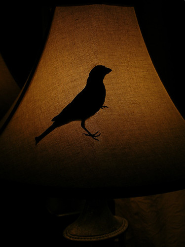 SHADE BIRD DSCN1057