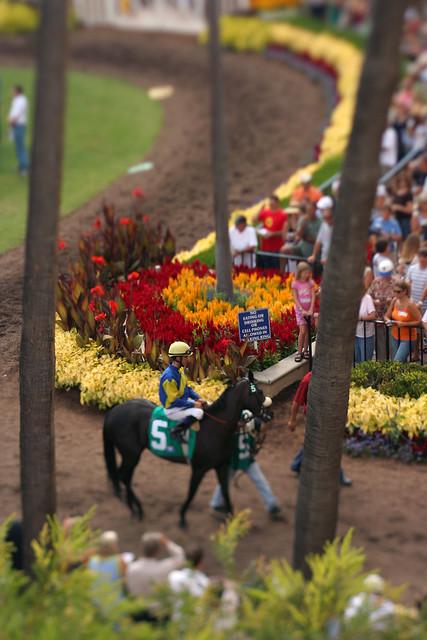 Photos of horse racing...