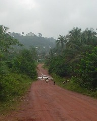Tarkwa road & sheep.JPG by roaminghomemaker
