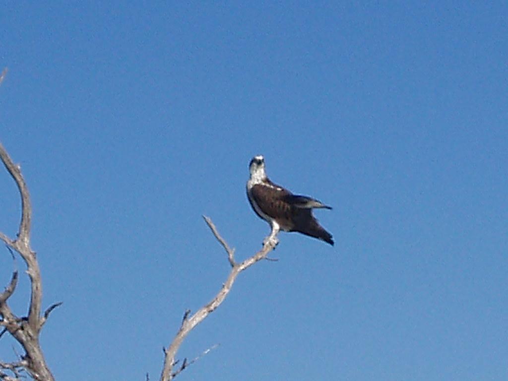 Ballee Island Western Australia Around Guides
