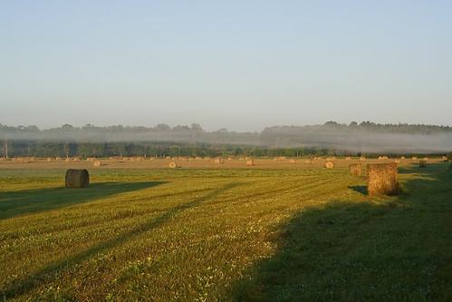 field minnesota fog littlefalls hay
