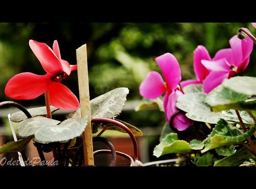 olhar - no jardim das sensações  um olhar a me seguir by Odete de Paula