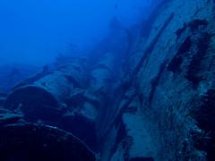 reef(0.0), sea(1.0), marine biology(1.0), underwater(1.0), shipwreck(1.0),