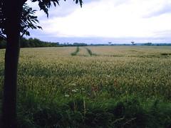 Walk to Cambridge