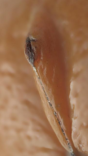 Klitoris Abschneiden - biguzde - seite 5
