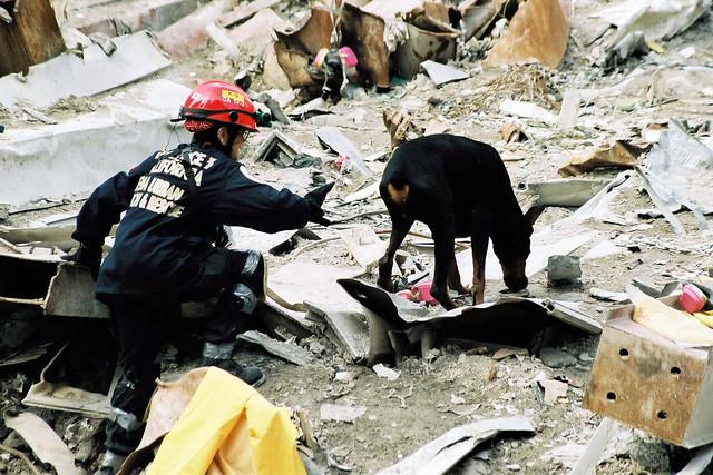 Rescue Small Dogs In Naples Florida