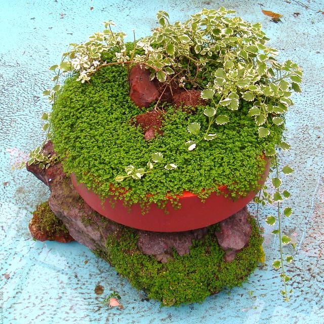 Plantas en el jard n bot nico cosmovitral toluca m xic for Plantas de un jardin botanico