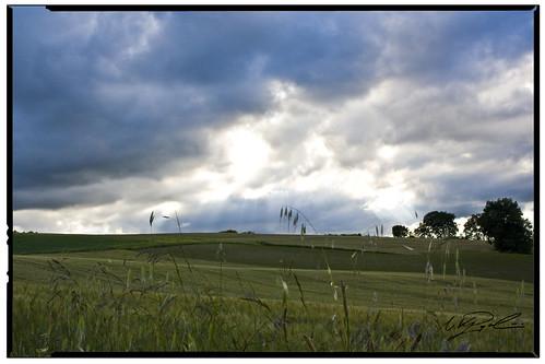 italy verde italia colore estate campagna agosto sanlorenzo marche colline sanlorenzoincampo montalfoglio