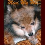 Mini Wu Wu