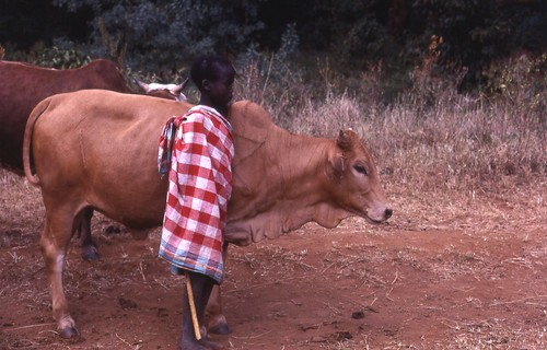 Young Maasai herder posing with one of his favorite animals, Kenya, 1979