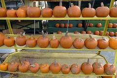plant(0.0), persimmon(0.0), vegetable(1.0), pumpkin(1.0), calabaza(1.0), produce(1.0), fruit(1.0), food(1.0), winter squash(1.0), cucurbita(1.0), gourd(1.0),