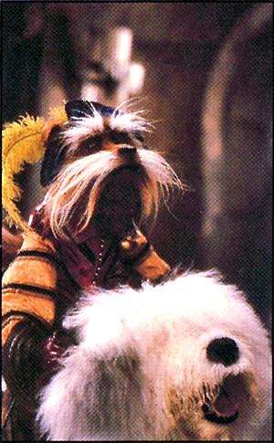 Sir Didymus Dog Name
