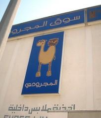bookworm camel