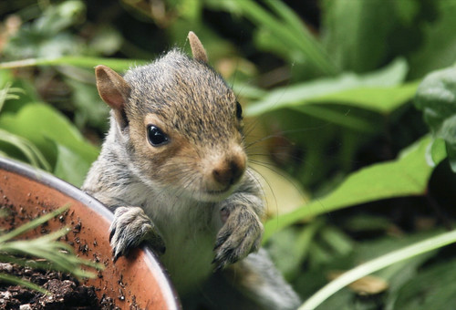 Baby Squirrel 2
