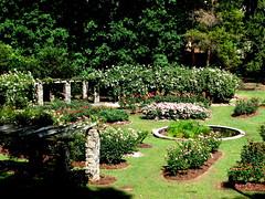 Rose Garden, Raleigh NC 6709