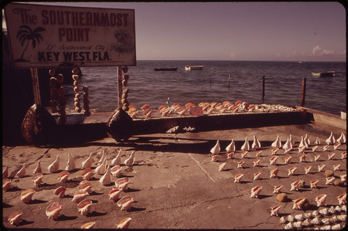 Souvenir Seashells for Sale at the Southernmost Point of the United States.