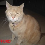 ClLIFFORD