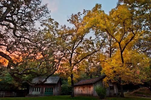 ca autumn portrait fall bar landscape us maple oak stable redbluff sacramentoriver ideadobe