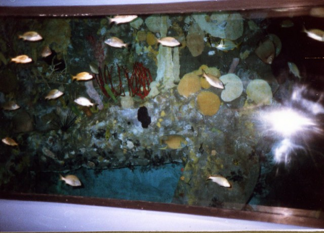 more fishies, aug '86