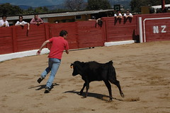 bull(0.0), tradition(0.0), performing arts(0.0), herding(0.0), cattle(0.0), matador(0.0), bullfighting(0.0), animal sports(1.0), cattle-like mammal(1.0), event(1.0), sports(1.0), bullring(1.0), performance(1.0),