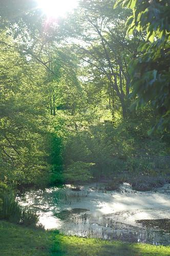 trees tree boston forest ma spring massachusetts harvard arnold arboretum flare sunburst harvarduniversity bostonma 2010 arnoldarboretum emeraldnecklace cameranikond50 exif:exposure=001sec1100 exif:exposure_bias=0ev exif:focal_length=50mm treemuseum exif:aperture=f50 camera:make=nikoncorporation exif:flash=offdidnotfire camera:model=nikond50 flickrstats:galleries=1 exif:lens=50mmf18 meta:exif=1274018091 flickrstats:favorites=1 exif:orientation=horizontalnormal exif:filename=dscjpg exif:vari_program=auto exif:shutter_count=43695 meta:exif=1350398411