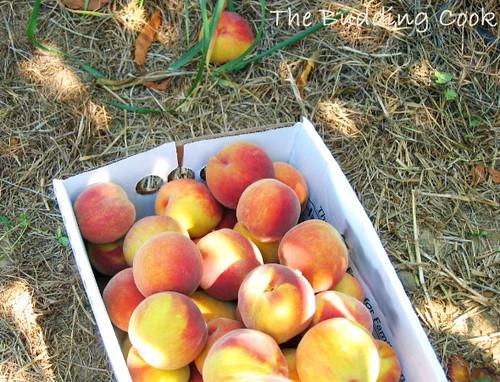 Peach5