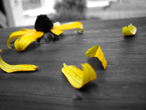 white black flower color colour macro yellow petals selective