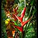 Robert's garden, Costa Rica (7)