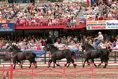 rodeo(0.0), cattle-like mammal(0.0), festival(0.0), bull(0.0), bullring(0.0), fair(0.0), bullfighting(0.0), animal sports(1.0), stallion(1.0), equestrian sport(1.0), tradition(1.0), sports(1.0), horse(1.0), horse harness(1.0), traditional sport(1.0),
