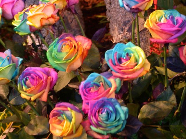 tie dye roses flickr photo