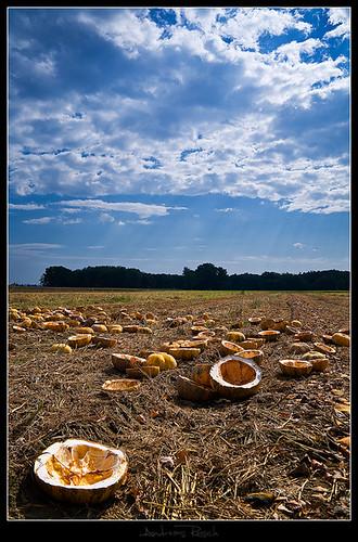 sky field austria empty pumpkins harvest styria badradkersburg