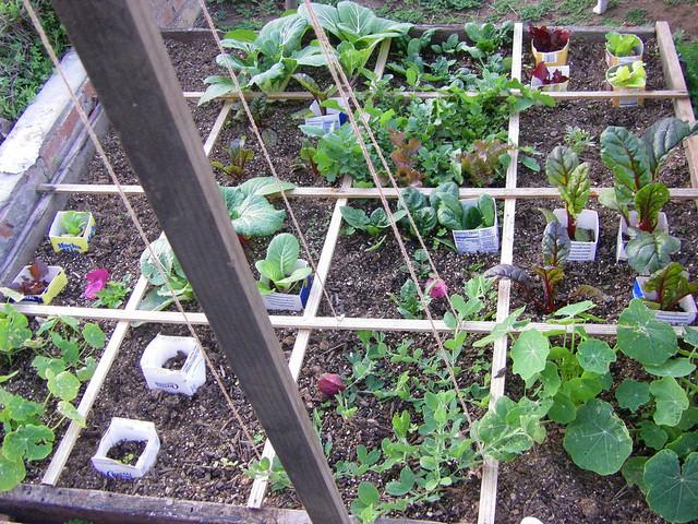 Garden 1 6 09 Flickr Photo Sharing