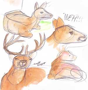 Maine Wildlife Park - Deer