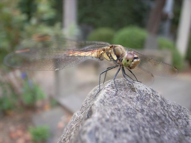 Snake Feeder Flickr Photo Sharing