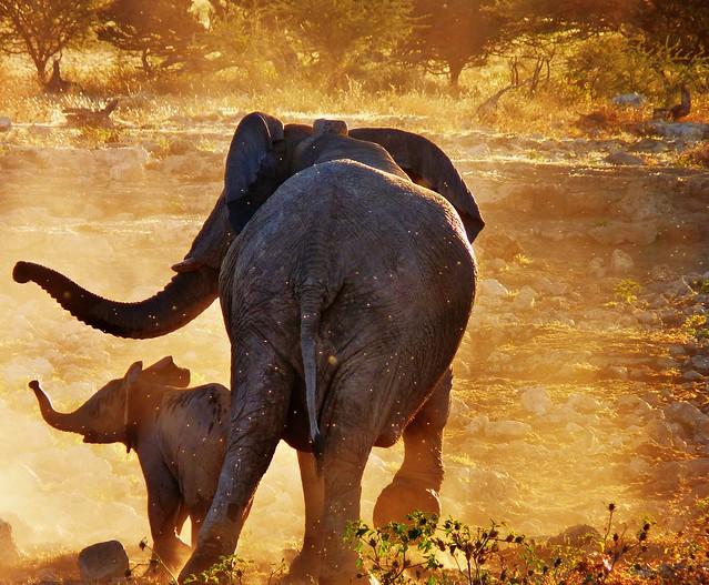 Madre elefante y su cría, Namibia, África