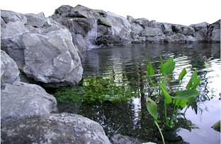 how to build a biological pond filter