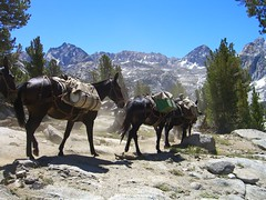 vehicle(0.0), mule(1.0), mountain(1.0), trail riding(1.0), mountain range(1.0), pack animal(1.0), herd(1.0), landscape(1.0),
