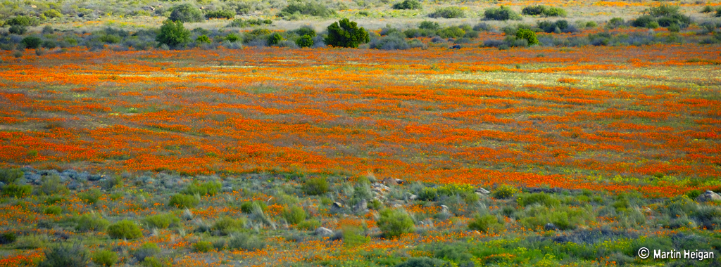 Namaqualand Flowers Best Time