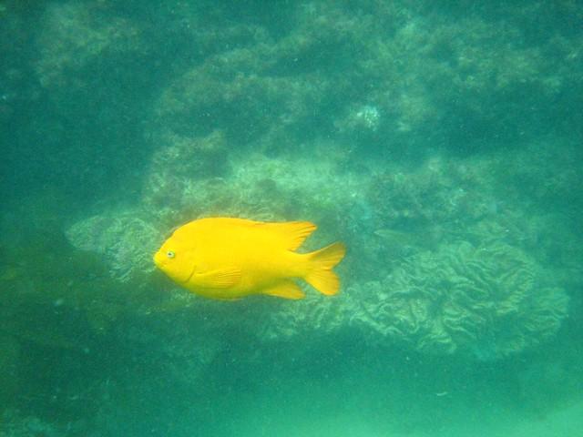 Laguna Beach Dive Center Torrox