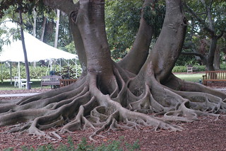 Tree roots, they were AMAZING!