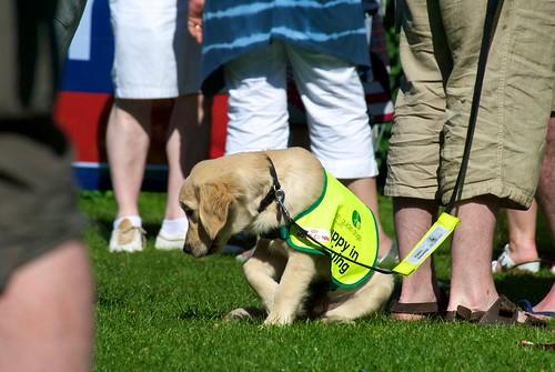 training golden retriever puppies