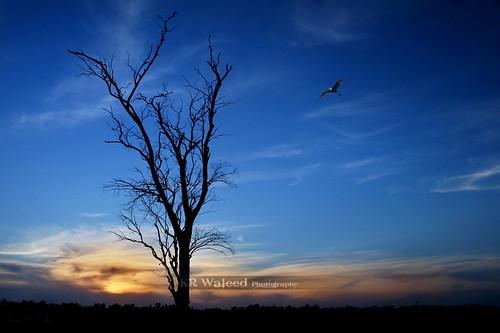 sunset canon landscap