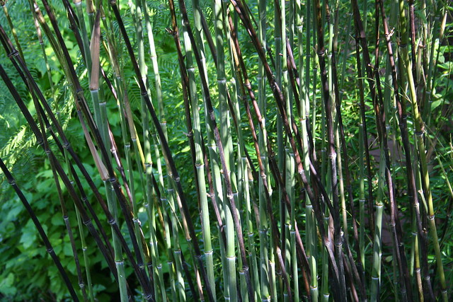 bamboo canes - new & old