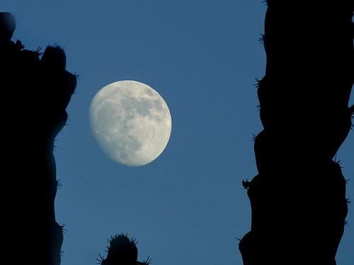 cactus moon1 DSC0043