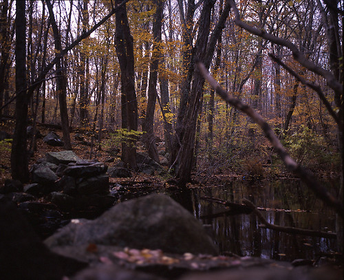 fall 120 film mediumformat foliage rvp100f mamiyarb67 fujivelvia100f eastgreenwichri mamiya90mm