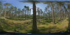 Aviemore: Pine Wood 1 Speybank Kincraig Scotland