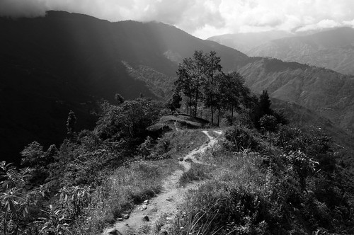 Paysage du Darjeeling