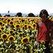 girasoli || sunflowers by remuz [Jack The Ripper]